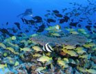 The abundance of fish in a healthy coral reef ecosystem 
