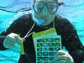 Teacher Dena Deck gets familiar with the species found in the Hawaiian Archipelago.  Photo: Hans Van Tilburg/NOAA