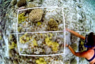 Coral research at Midway.  Photo by J.E. Maragos.
