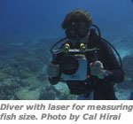 Diver with laser for measuring fish size.  Photo by Cal Hirai